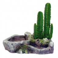 Ostrov s kaktusem L