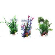 WONDER PLANT 30-35CM