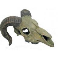 Skopová lebka 14,5x13,5x7,5cm