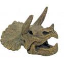 Triceratops lebka 15x14x10,5cm
