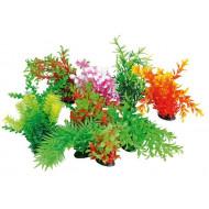 Plant Tropical 22-25cm